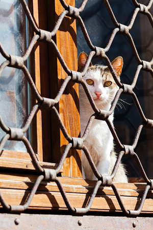 gratings: Cat sitting on the window, behind iron fence