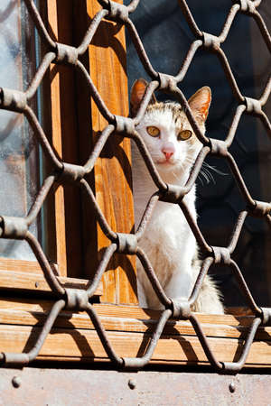 Cat sitting on the window, behind iron fence