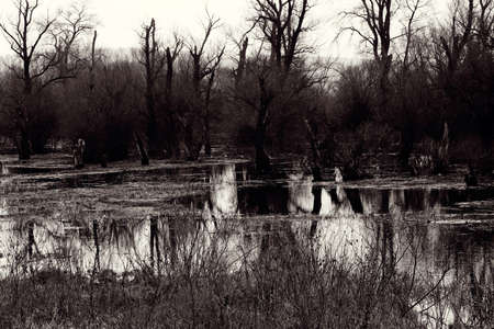 dark swamp in late fall, note shallow depth of field