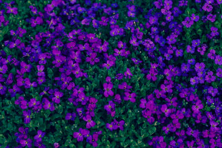 small purple flowers in the field, note shallow depth of field Imagens - 86545055