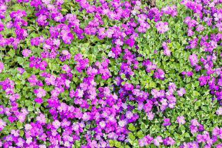 필드에 작은 보라색 꽃, 필드의 얕은 깊이를 참고