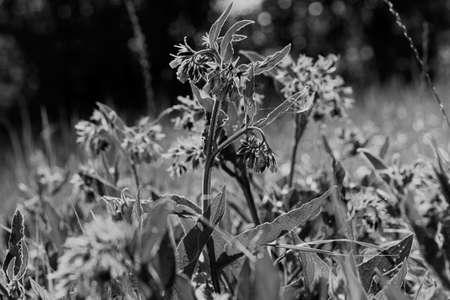 높이 녹색 잔디, 필드의 얕은 깊이 참고에서 야생 보라색 꽃
