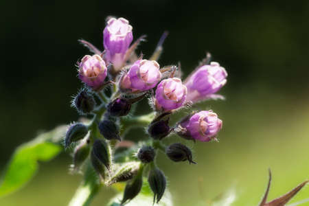 wild purple flowers on the green background, note shallow depth of field Imagens