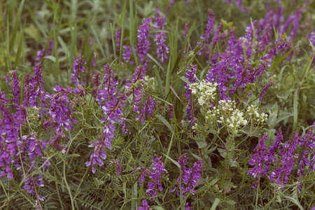 wild purple flowers in tall green grass, note shallow depth of field