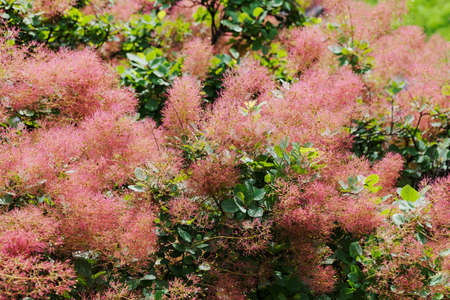 Fluffy tree with pink flowers note shallow depth of field stock fluffy tree with pink flowers note shallow depth of field stock photo 86545788 mightylinksfo