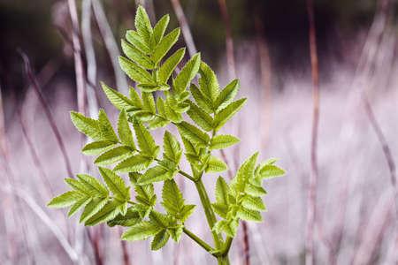 보라색 배경, 필드의 얕은 깊이를 참고에 녹색 잎