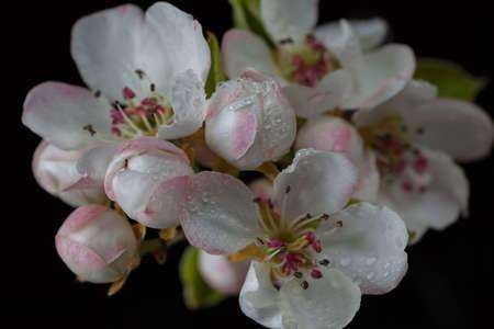 부드러운 분홍색과 흰색 꽃 어두운 배경, 필드의 얕은 깊이 참고