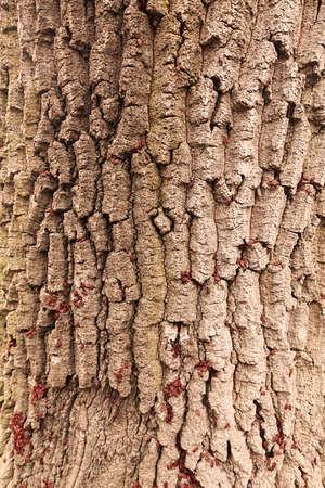メモ フィールドの浅い深さ、木の樹皮に赤 begbugs 写真素材