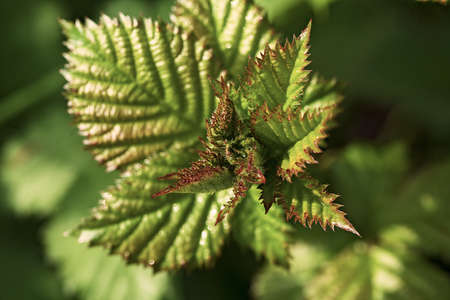 red - green leaves on the trees, note shallow depth of field