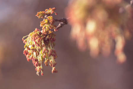 unusual buds on a tree branch, note shallow depth of field