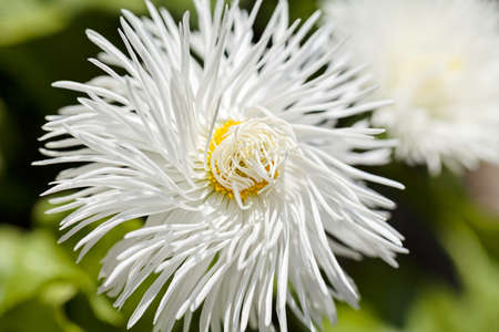 어두운 배경, 필드의 얕은 깊이를 참조 하 고 털 복 숭이 하얀 꽃