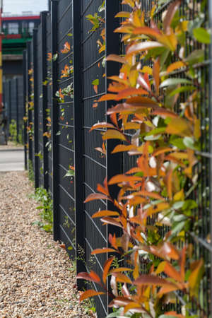 sharply: metal fence with a hedge behind, note shallow depth of field Stock Photo