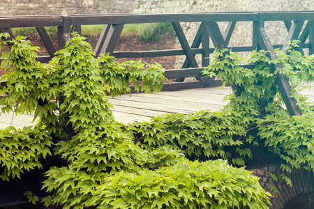 maleza: creepers on a wooden bridge, note shallow depth of field
