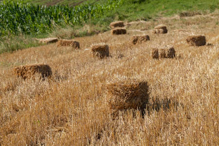 haystacks after the harvest, note shallow depth of field