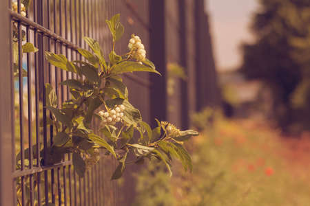iron fence covered with plants and grass, note shallow depth of field