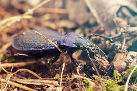 fastest insect on the World in nature, note shallow depth of field