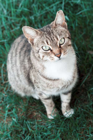 cat in the park on the green grass, note shallow depth of field