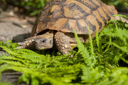 Tortoise on stone among the grass, note shallow depth of field