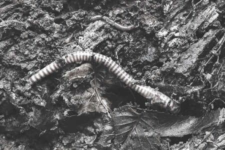 species of earthworms in nature, note shallow depth of field