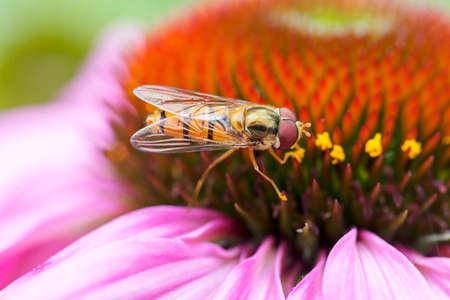 Wasp and honeycomb Stock Photo
