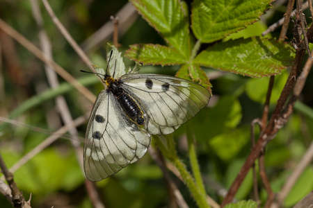 dept: White butterfly in a thick tall grass, note shallow dept of field Stock Photo