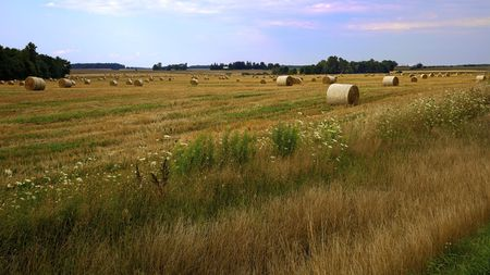Hay Harvest Stock Photo - 7570979