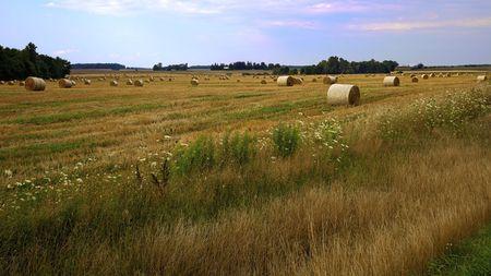 Hay Harvest Stock Photo - 7570979