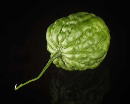 Bitter Melon isolated on black with reflection Stock Photo