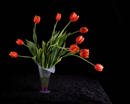 Tulips on Black Stock Photo