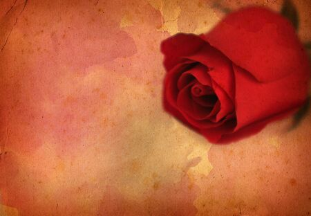 Rose - extra large old paper Stock Photo