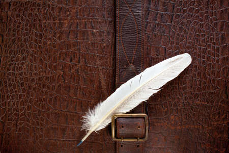 buckle: Vintage crocodile leather textured background with buckle and quill