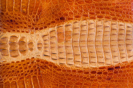 old leather: Crocodile leather texture background Stock Photo