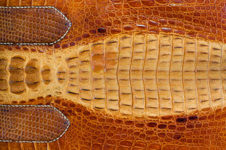 Crocodile leather texture background photo