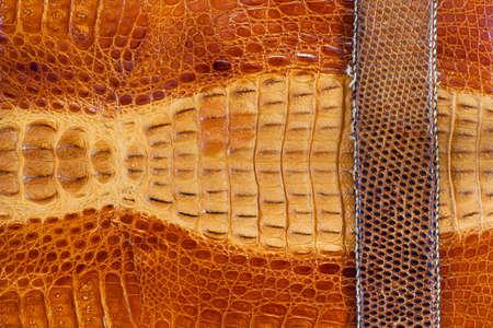 Crocodile leather texture background Stock Photo - 14666387