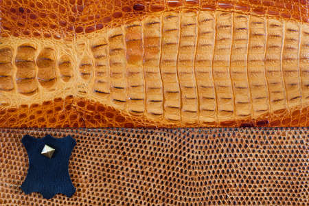 crocodile skin leather: Crocodile leather texture background Stock Photo