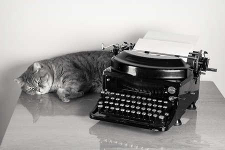 Britannico sorthair gatto e vintage vecchia macchina da scrivere sul tavolo foto desaturata