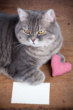 Valentine coraz�n y gato photo