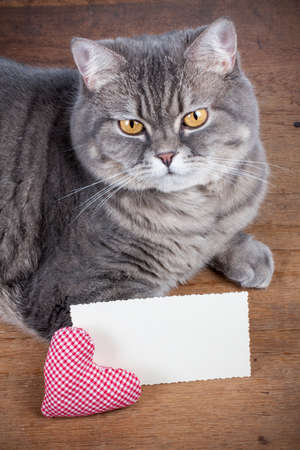 Valentine card, heart and cat photo