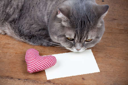 letter head: Valentine card, heart and cat