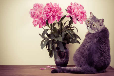 Cat and flowers bouquet in vase on wooden table Stock Photo - 20151728