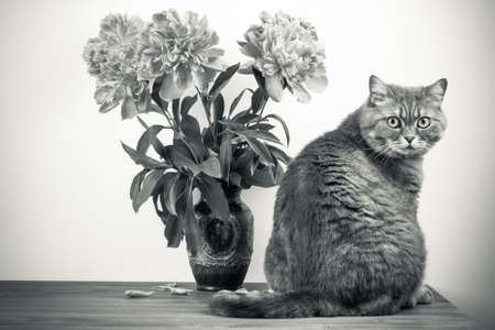 Cat and flowers in vintage vase on wooden table