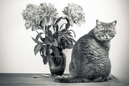 Katze und Blumen im Vintage-Vase auf Holztisch Lizenzfreie Bilder