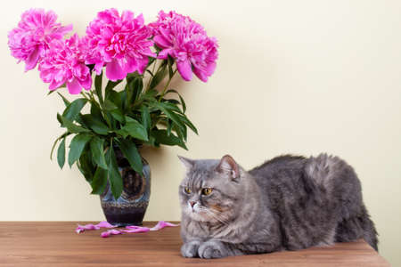 Cat and flowers bouquet in vase on wooden table photo