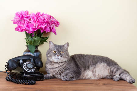 Vintage telephone, cat and flowers on table Stock Photo - 20151754