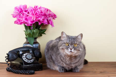 Vintage telephone, cat and flowers on table photo