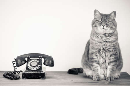 Vintage telephone and cat on table sepia photo