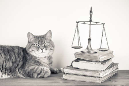 Scales, books and cat on a table. Vintage sepia photo