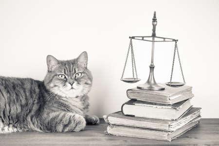 Bilance, libri e gatto su un tavolo. Vintage foto seppia Archivio Fotografico