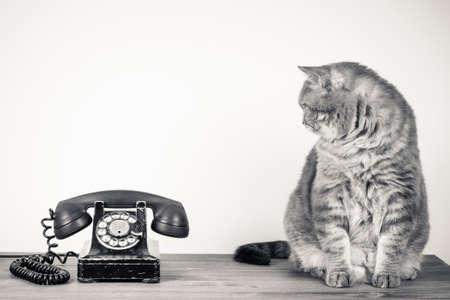 ビンテージ電話とテーブルのセピア色の写真に大きな猫
