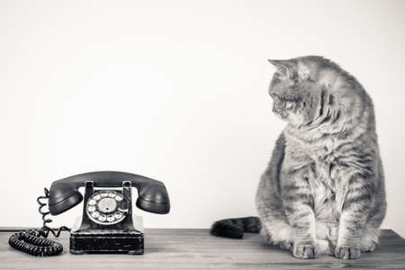Vintage telephone and big cat on table sepia photo